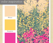 Peach, Yellow and Pink Color Palette