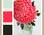 Mint Green, Pink and Dark Brown Color Palette