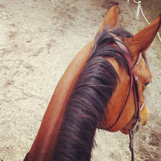 justin, my horse!