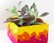 DIY Tissue Paper Planter Box