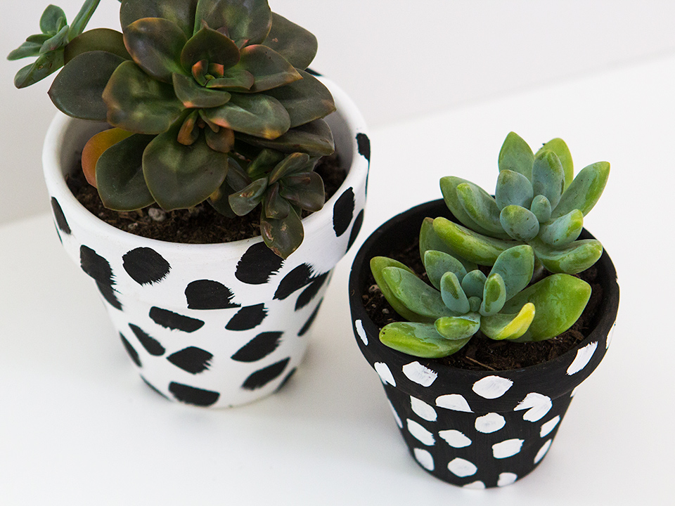Decorate your home with plants in these cute spotted terra cotta pots! Click through for a video tutorial.