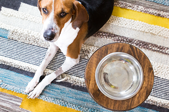Love this DIY raised dog bowl stand. So simple to make and looks so much better than regular bowls.