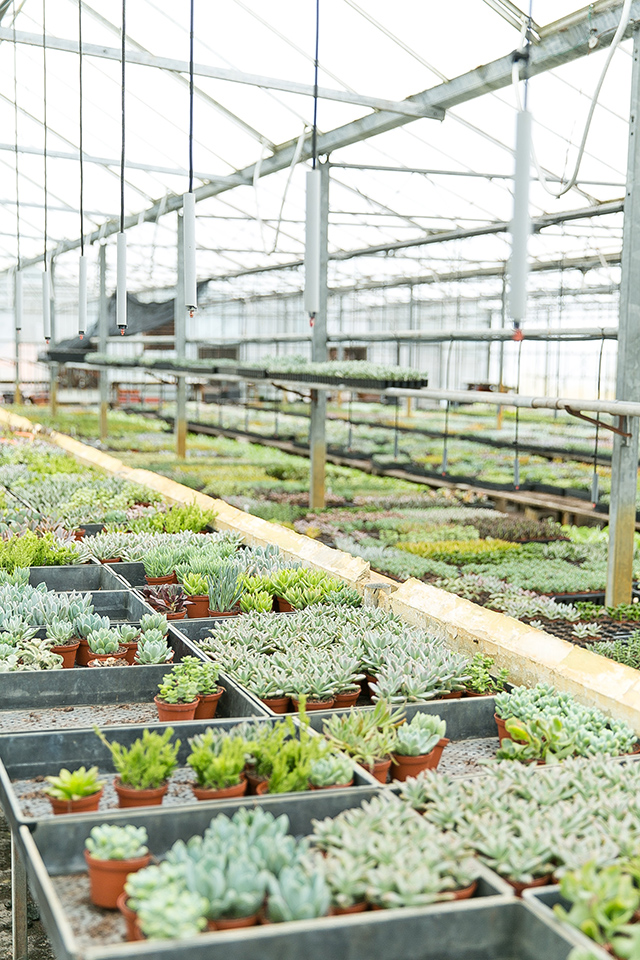 Blogger Sarah Hearts shares the best place to buy succulents in central Florida. Click through to check out her other favorite spots around Orlando.