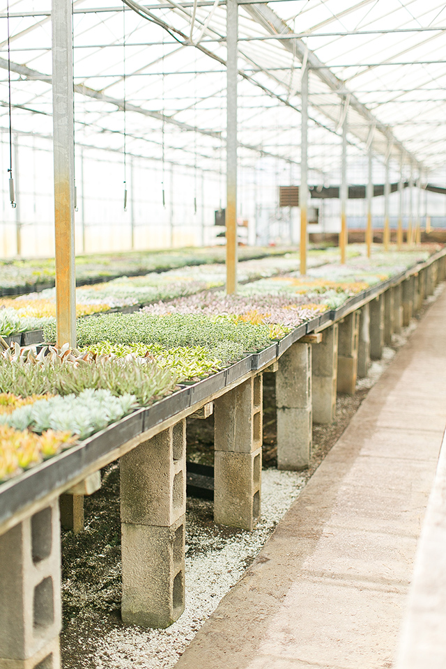 Next time you're in Orlando hop in the car and visit this awesome succulent only nursery.