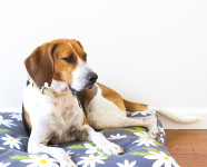 DIY Easy to Sew Zippered Dog Bed Cover