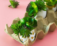http://sarahhearts.com/wp-content/uploads/2017/03/egg-succulents-3-186x150.jpg